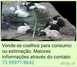 Vende-se Coelhos