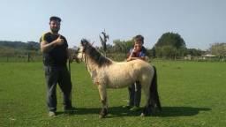 Mini poney