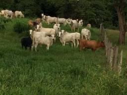 Fazenda para pecuária em Paraíso