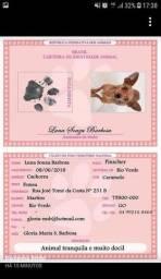 RG e Certidão para seus pets