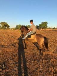 Vendo uma égua muito boa para crianças e muito massa