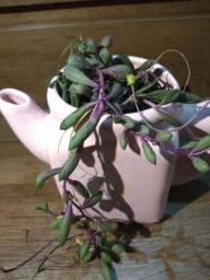 Arranjo pendente em vaso de cerâmica Bule