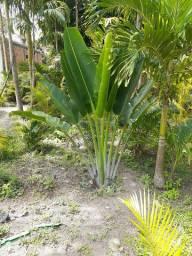 Vende-se plantas 100% naturais e preço muito bom