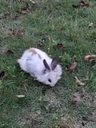 Vendo 6 coelhos já adultos