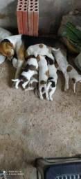 Doação mãe e filhotes
