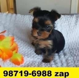 Canil Filhotes Cães BH Yorkshire Maltês Bulldog Shihtzu Beagle Lhasa Poodle