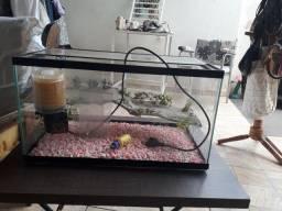 Aquário para tartaruga