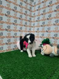 Boder Collie é no Da Madre Pet Shop