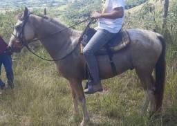 Cavalo 5 anos