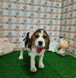 Beagle é no Da Madre Pet Shop