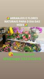 Flores Ornamentais dia das mães