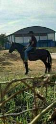 cavalo colorado!