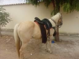 Vendo um cavalo de estera