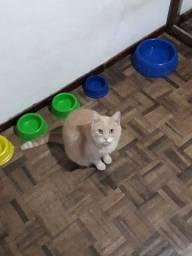 Doação de gatos e gatas adultos e castrados