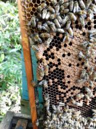 Mel abelha