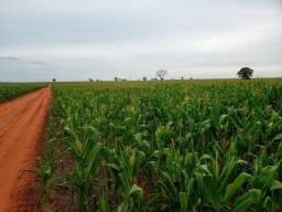 Fazenda plantando soja