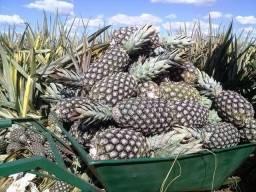 Mudas de abacaxi, Santo Antônio de Jesus