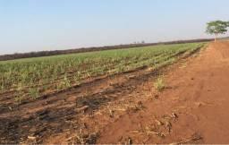Fazenda em ituverava 66 alqueires 13.200.000.00