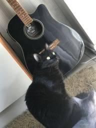 Gatos (ler anúncio)