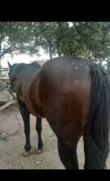 Cavalo sumido