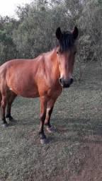 Cavalo (2 cavalos) Urgente