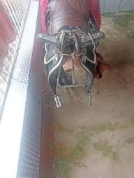 Sela para cavalgada de mula