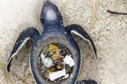 Cuide mais da natureza, não use canudo de plástico e condene a fauna, troque pelo de inox