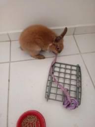 Mini coelho com casinha 60 reais