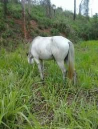 Cavalo 2 anos e meio só vendo não troco