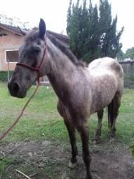 Cavalo de montaria e carroça