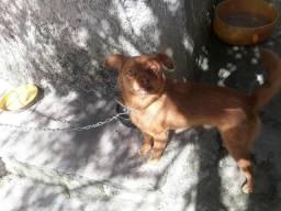 Cachorro pequeno pra doação bom pra criança