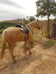 Vendo ou troco cavalo