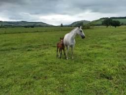 Vendo - Fazenda com 50 hectares no Sul de Minas