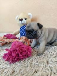 Excepcionais Filhotes de Pug Disponíveis