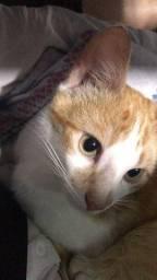 Lindo gatinho Adoção responsável urgente !