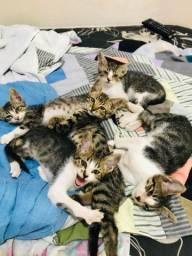 Doação de gatinhos em itabaiana