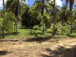 Sitio em Japaratinga