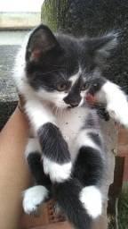 Gatinha adoção
