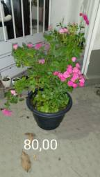 Lindas plantas