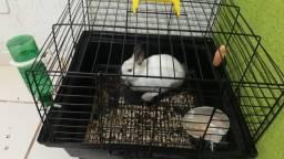 Vendo coelho gaiola e acessórios  !