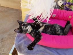 Adoção filhote femea 5 meses castrada e vermifugada em Ribeirao