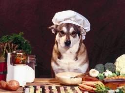 Aprenda a fazer comida orgânica para seu Pet