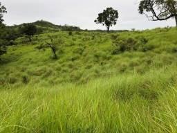Fazenda 50 Alq Toda Formada - Padre Bernardo GO