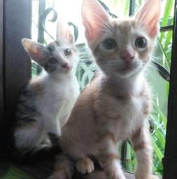 Doando 2 gatos ( fêmea e macho )