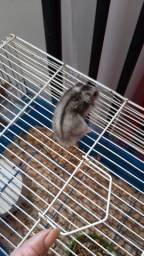 vende-se hamster baixei para vender logo r$ 70 vai com a gaiola