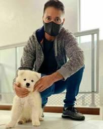 Adestramento e psicologia canina