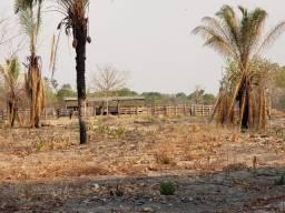 Fazenda arrendamento 3.300 cabeças Pantanal