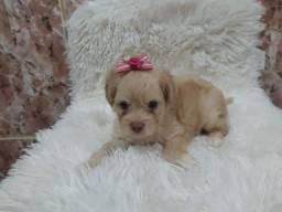 Poodle toy para exigentes! 98410.80.66