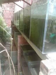 Bateria de aquário para criação de peixes