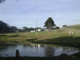 Chácara  4,8 hectares vendo ou arrendo.